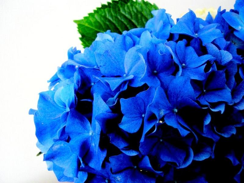 Speciale Settimana Blu