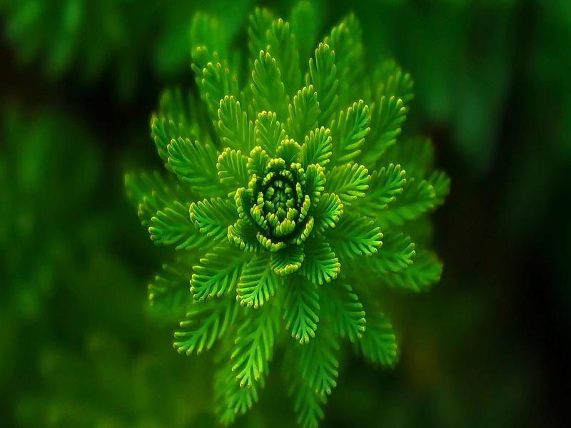 Speciale Settimana Verde